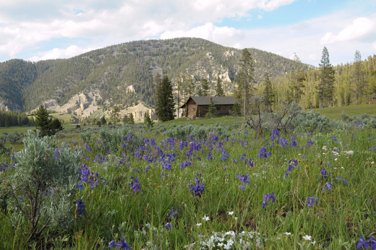 Montana log cabin rentals